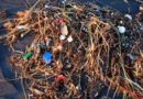 It's not just fish, plastic pollution harms the bacteria that help us breathe