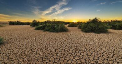 Warming of 2°C would release billions of tonnes of soil carbon, research says